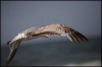 sea gull ocean grove