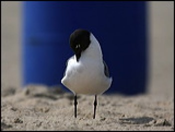 ocean grove bird