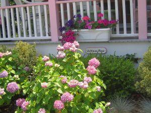 Ocean Grove Victorian cottage, summer garden, hydrangeas, window box, petunias