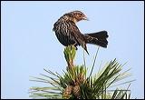 bird on pine branch, pine cones and bird