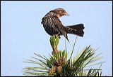 bird on pine branch, pine cones and bird