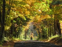 country road, fall, fall foliage, turning leaves