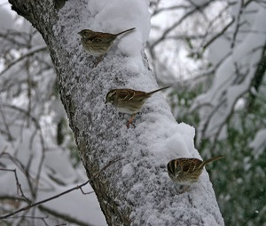 Snow in Central Park, Murray Head,
