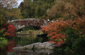 autumn, fall foliage, Central Park, stone bridge