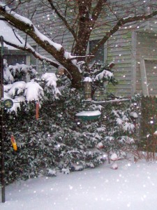 bird feeder, snow storm, December 26th, La Vien en Rose