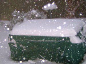 La Vie en Rose, snow storm, December 26th,