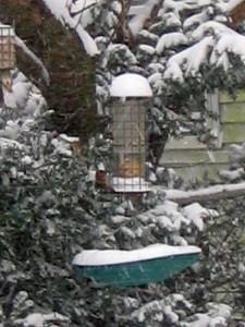 sparrows on feeder, Ocean Grove, 30pmVie en Rose