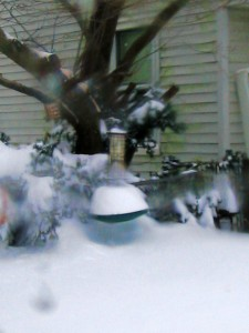 bird feeder, snow drifts,December 27th