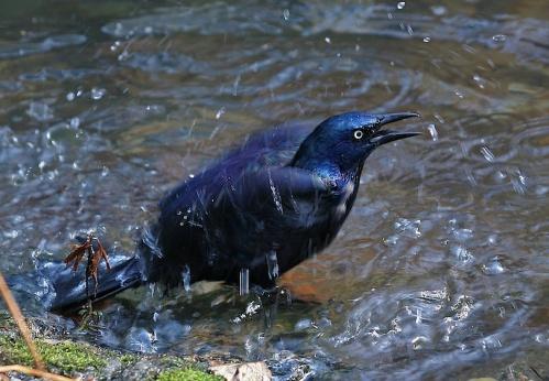 taking a bath, Central Park, New York City, Murray Head,