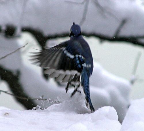Central Park New York city, Murray Head, snow storm,