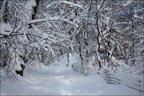 snow storm, central park, new york city,