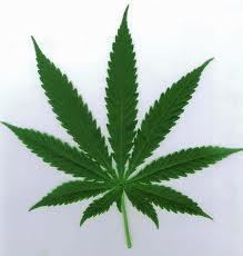 marijuana,mary jane, weed, grass, pot, cannabis
