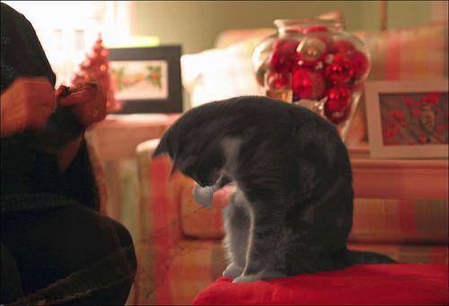 Christmas '10, Nicky,Susan Taylor