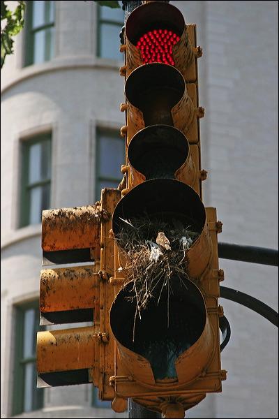 stop light, bird's nest, new york city