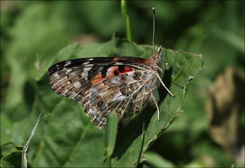 butterfly, Central Park, Conservatory Garden