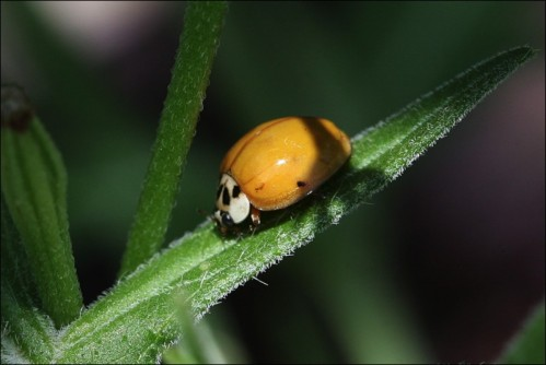 lady bug, Central Park,