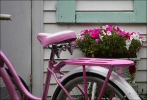 Schwinn bike, pink and white petunias, Ocean Grove