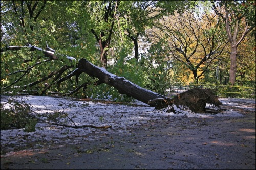 October 29th snow storm, nyc, central park