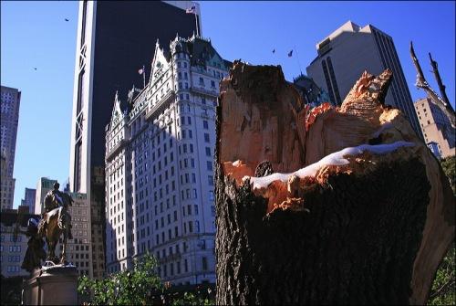 Plaza Hotel, Central Park