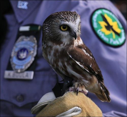 owl, Hawk Creek Wildlife,
