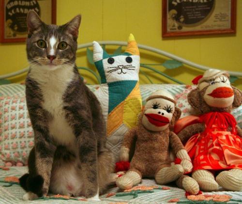Nick, cat, vintage sock monkeys, quilted cat
