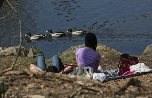 3 Mallards, two lovers