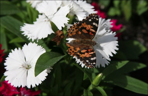butterfly, spring in New York City