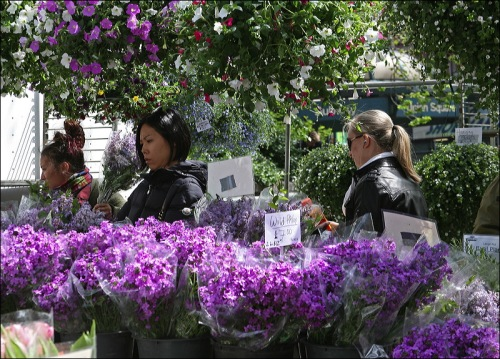 Union Square Greenmarket, flowers for sale