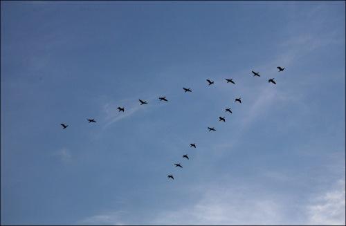 Ocean Grove, Jersey shore, Canadian geese