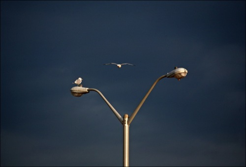 Ocean Grove, Asbury Park, Jersey shore, sea gull