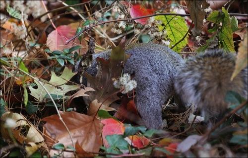 central park, squirrel
