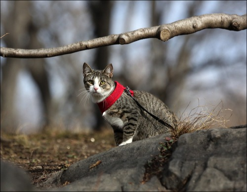 A Cat in a Collar