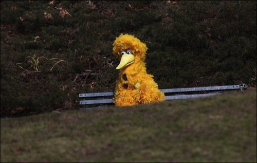 Is Big Bird Lost?