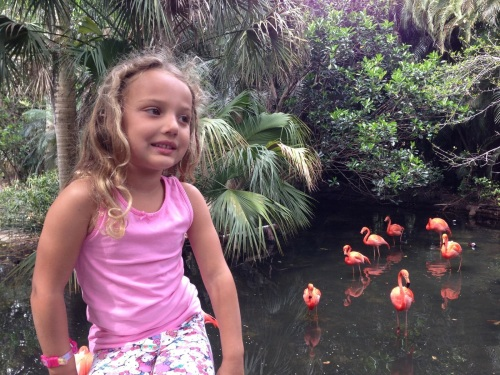 """I love flamingos too"""