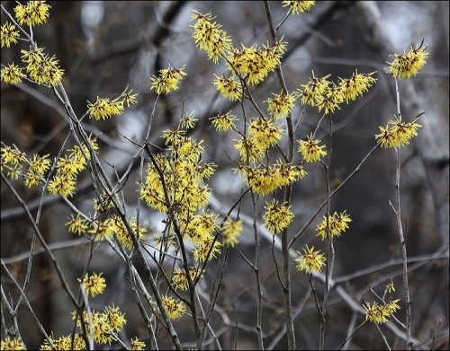 Feathery Yellow Petals