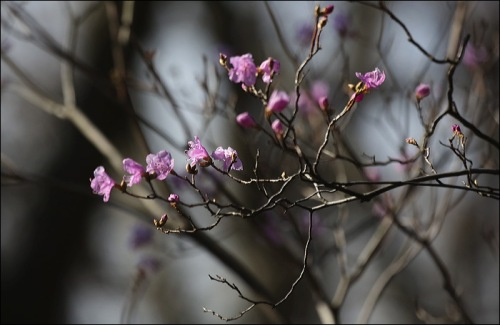 Tiny Pink Buds and Flowers