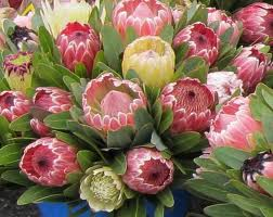 PROTEAS photo by blogs.scientificamerican.com