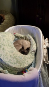Pasha Lays Claim to the Bassinet