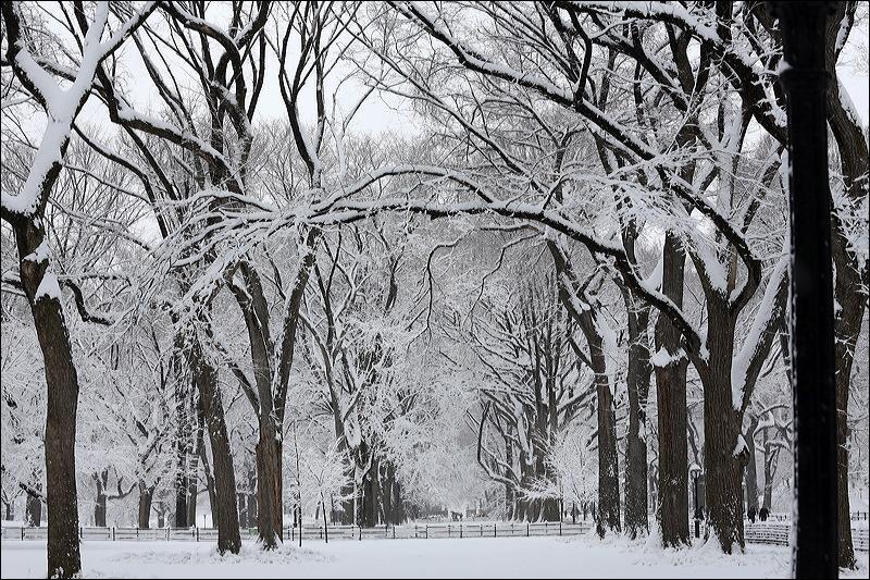 Central Park Snow - City Still Life (5/6)