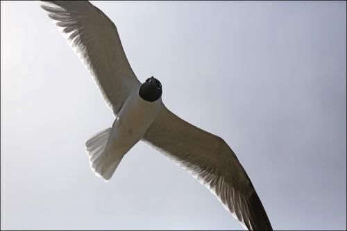 Aerodynamically Perfect