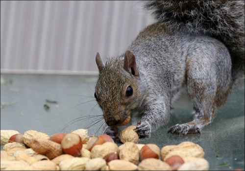"""Geez, Hazelnuts!  Must Be A Holiday Or Something"""